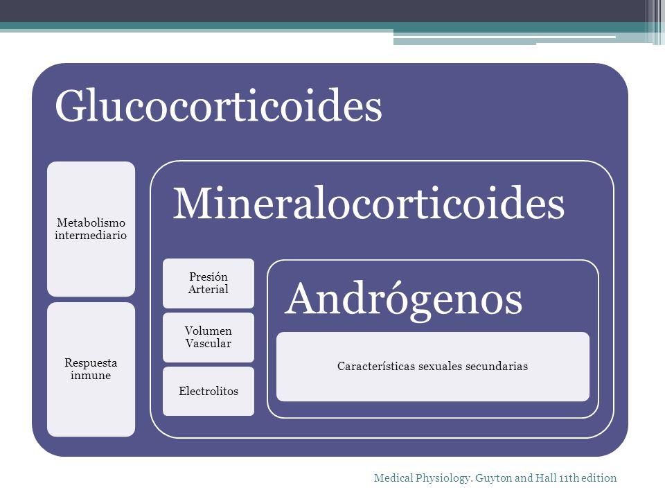 Glucocorticoides Mineralocorticoides Andrógenos