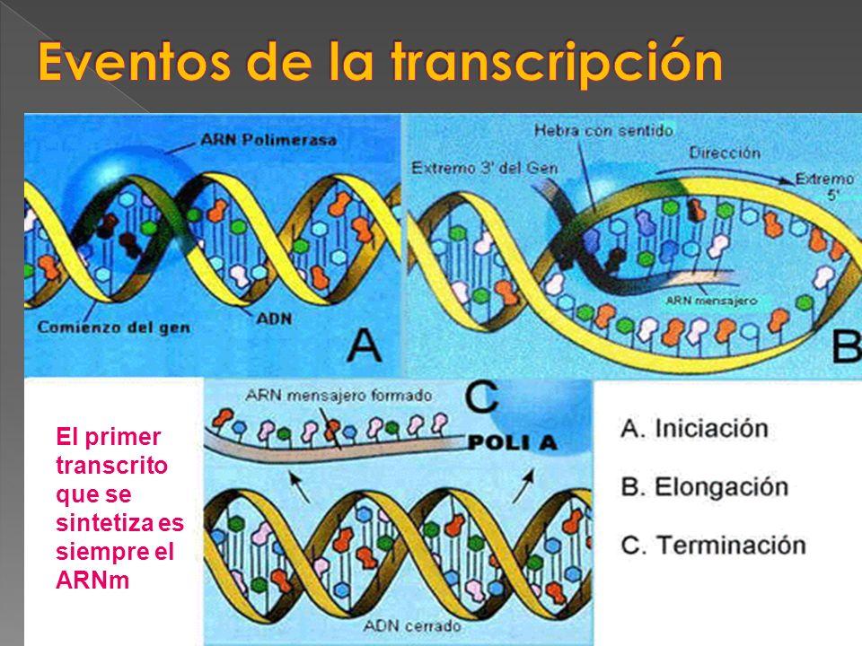 Eventos de la transcripción