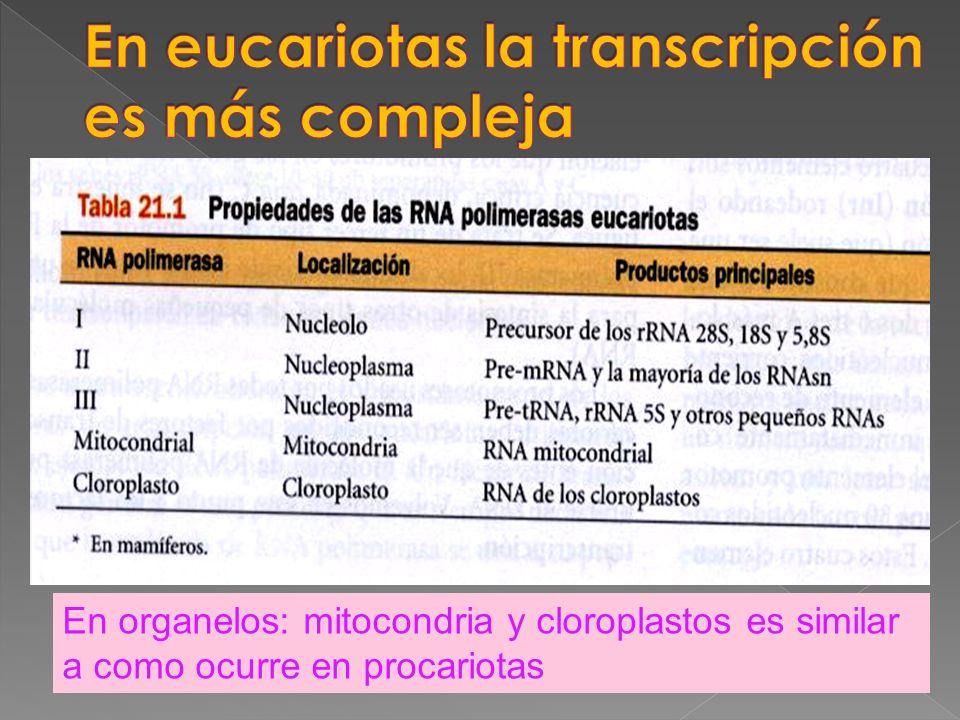 En eucariotas la transcripción es más compleja