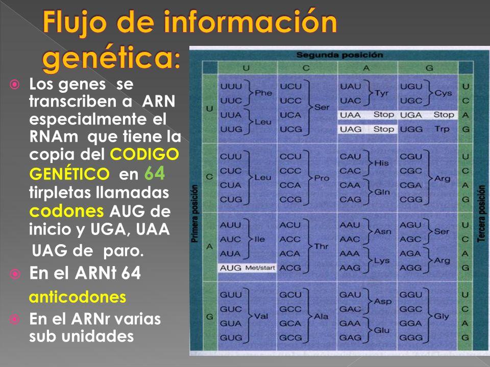 Flujo de información genética: