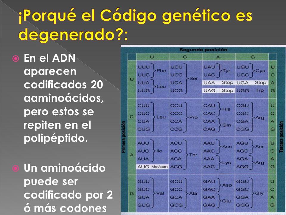 ¡Porqué el Código genético es degenerado :