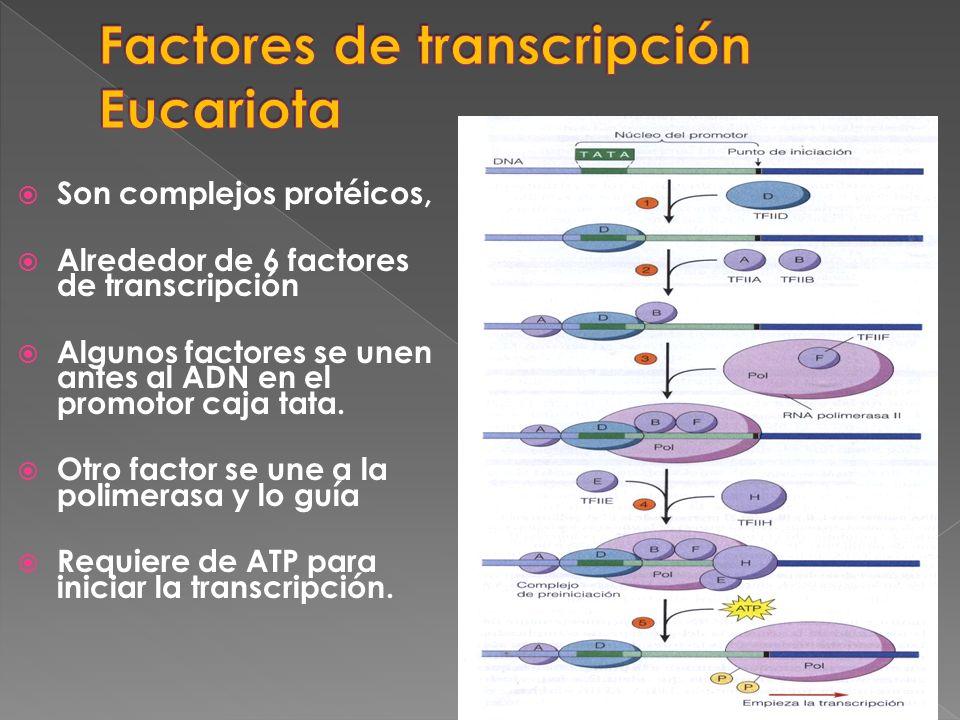 Factores de transcripción Eucariota
