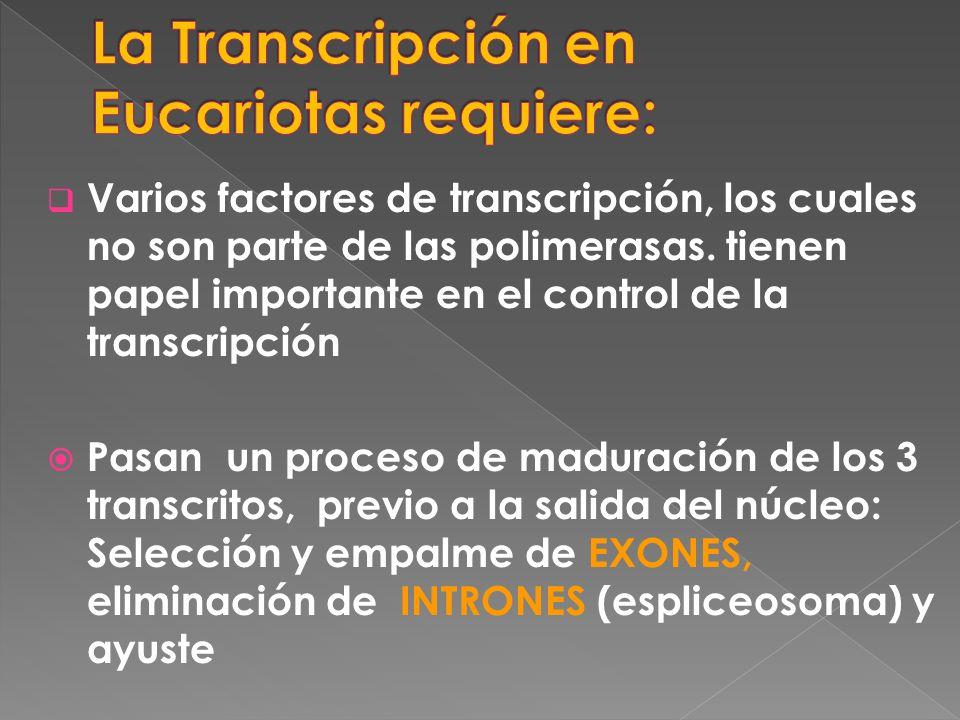 La Transcripción en Eucariotas requiere: