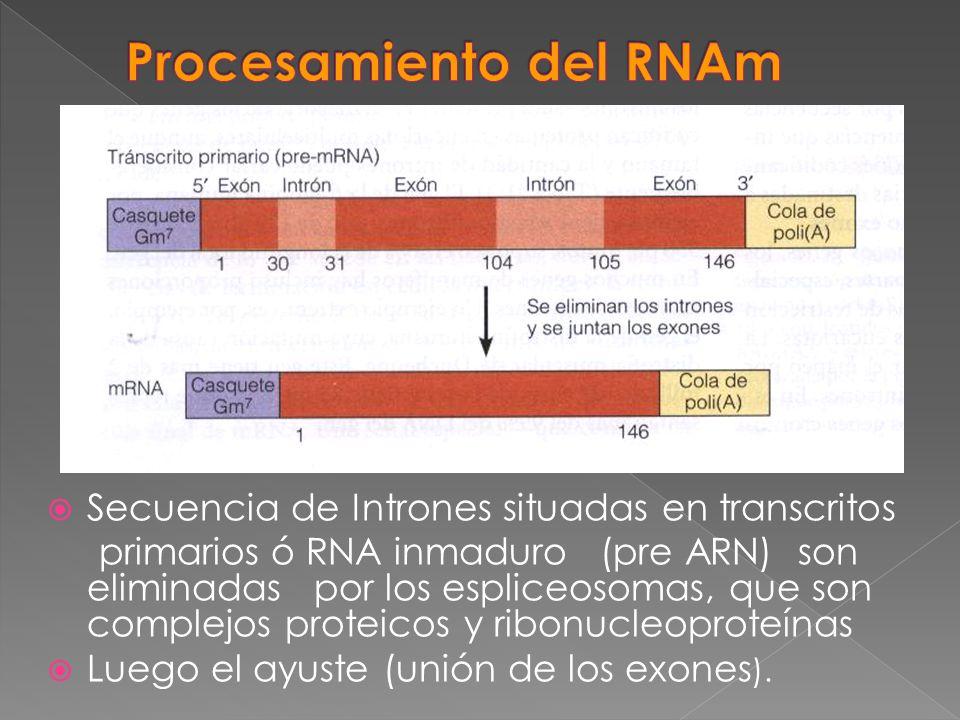 Procesamiento del RNAm