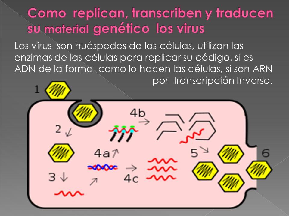 Como replican, transcriben y traducen su material genético los virus