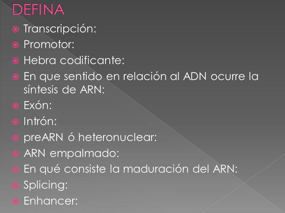 DEFINA Transcripción: Promotor: Hebra codificante: