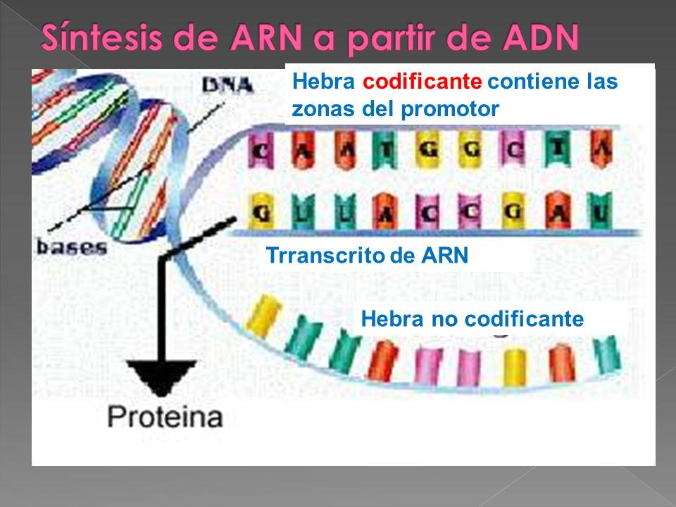 Síntesis de ARN a partir de ADN