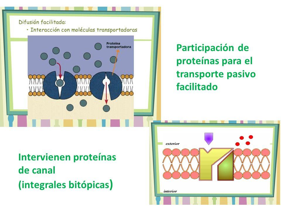 Participación de proteínas para el transporte pasivo facilitado