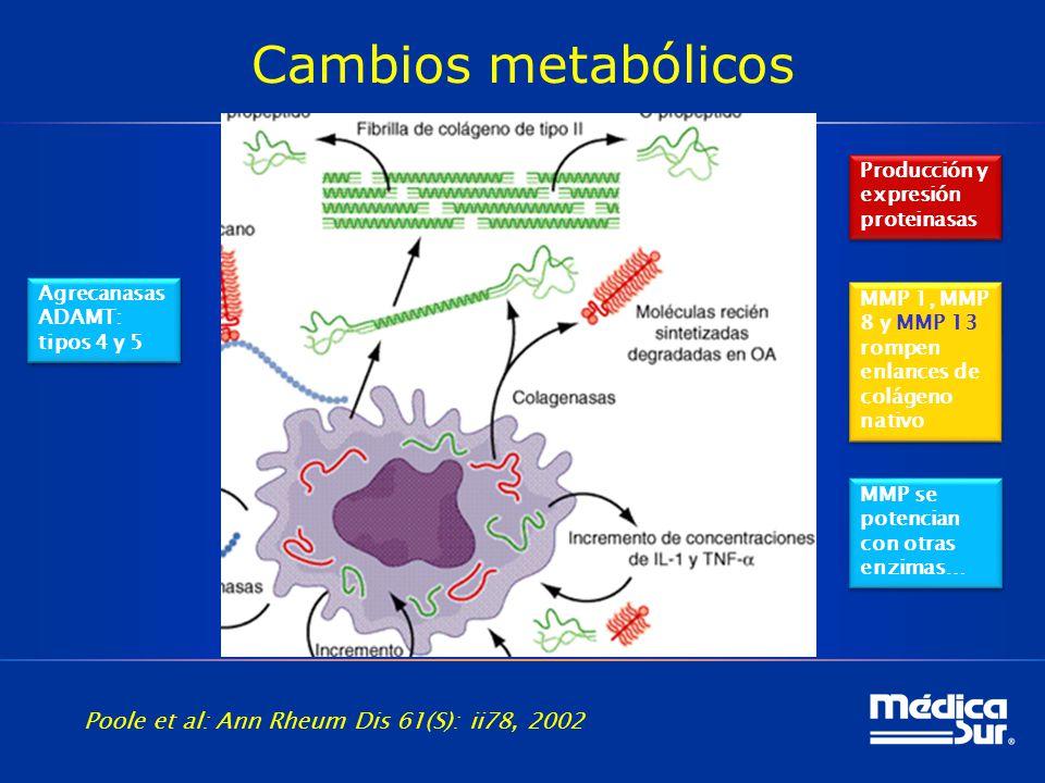 Cambios metabólicos Poole et al: Ann Rheum Dis 61(S): ii78, 2002