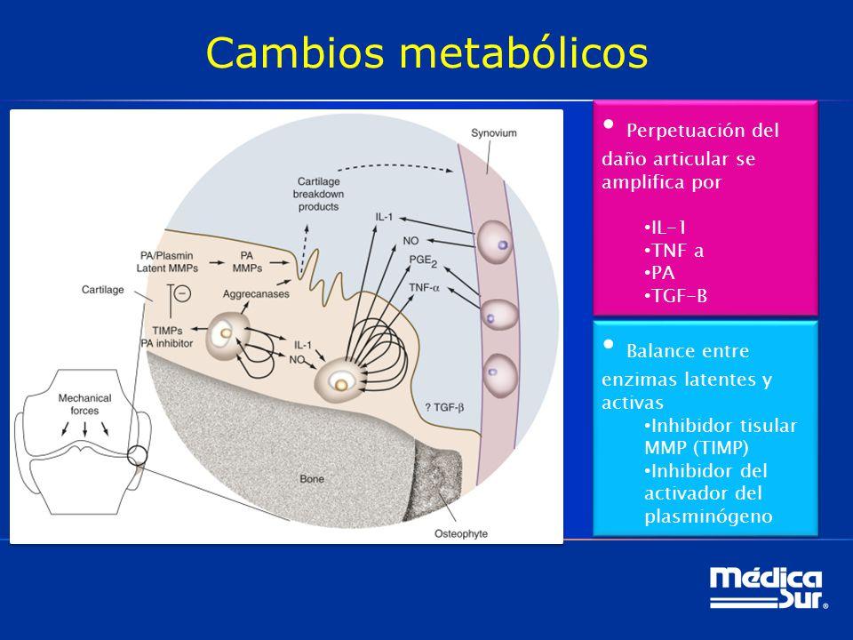 Cambios metabólicos Perpetuación del daño articular se amplifica por