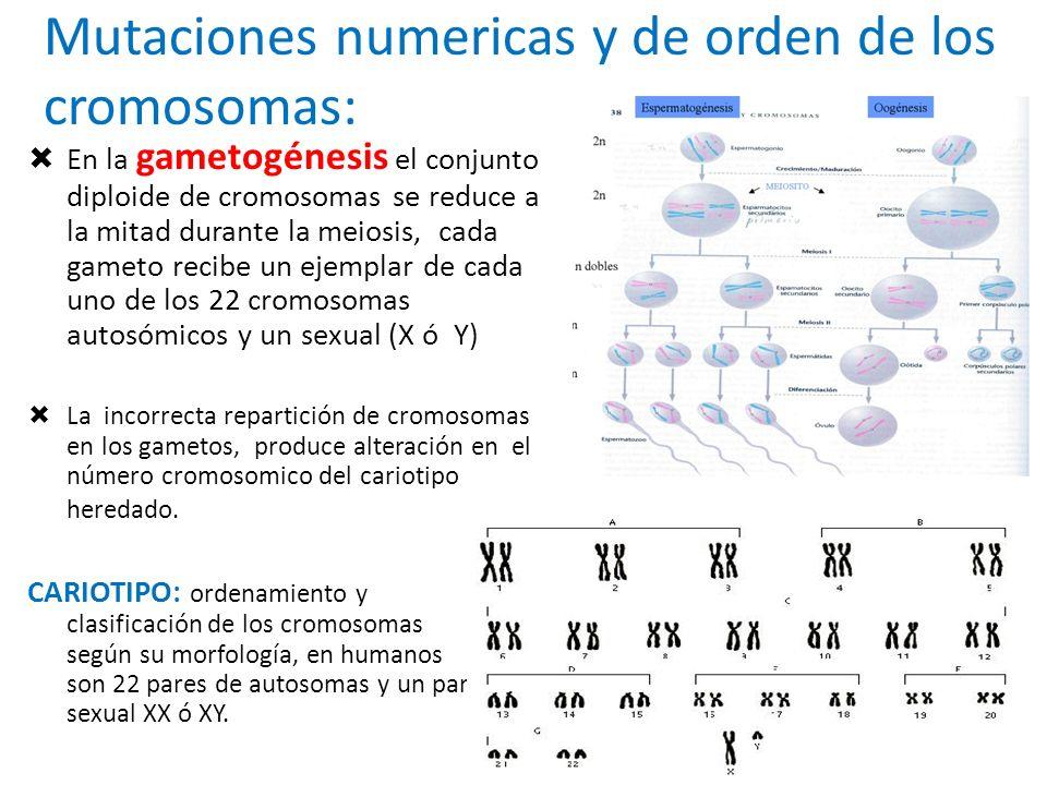 Mutaciones numericas y de orden de los cromosomas: