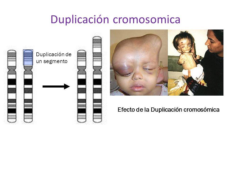 Duplicación cromosomica