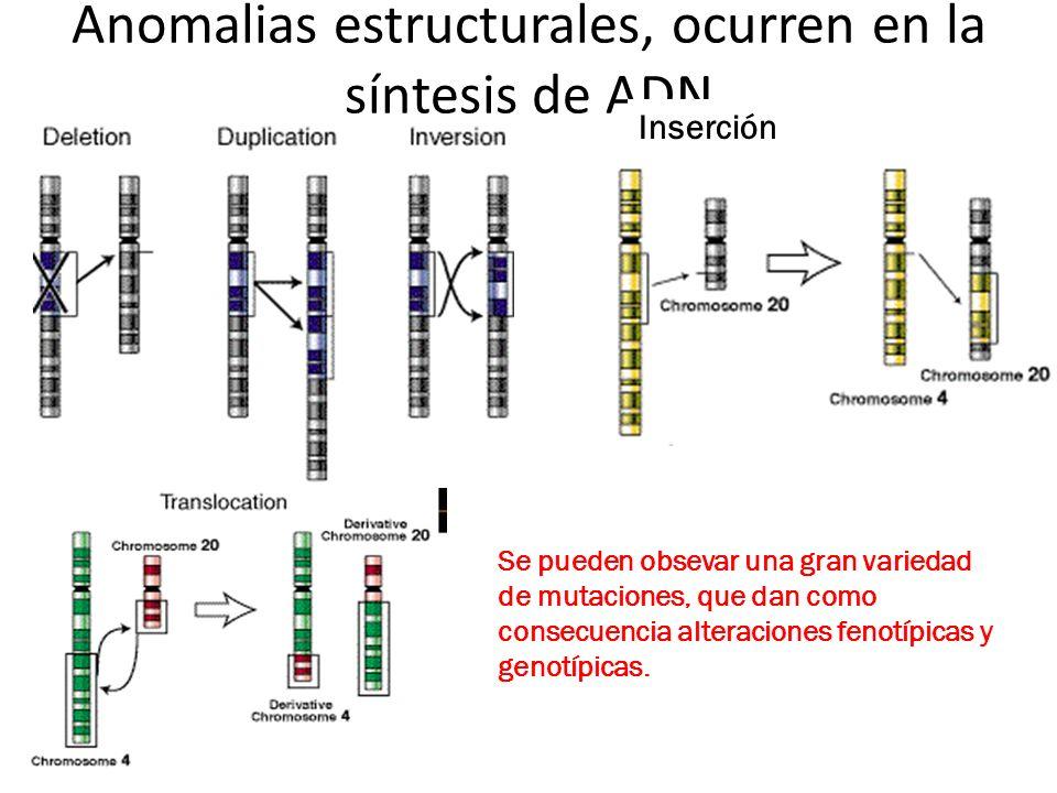 Anomalias estructurales, ocurren en la síntesis de ADN