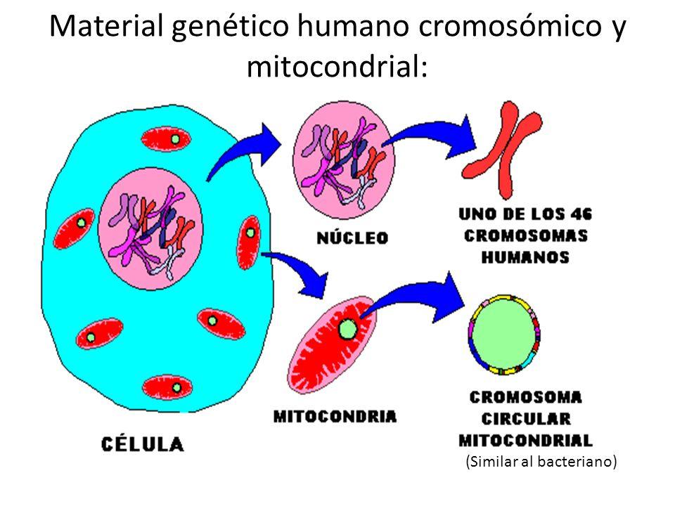 Material genético humano cromosómico y mitocondrial: