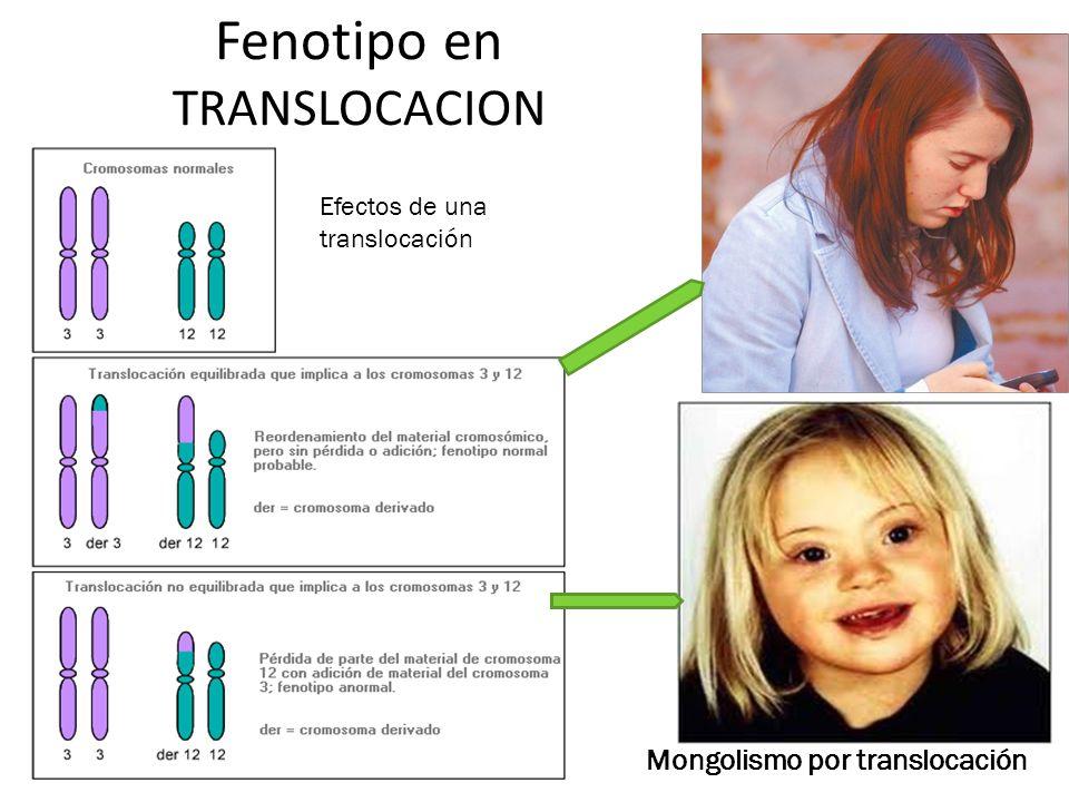 Fenotipo en TRANSLOCACION