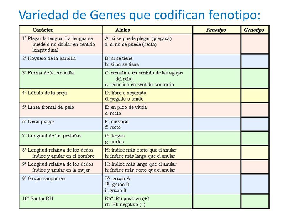 Variedad de Genes que codifican fenotipo: