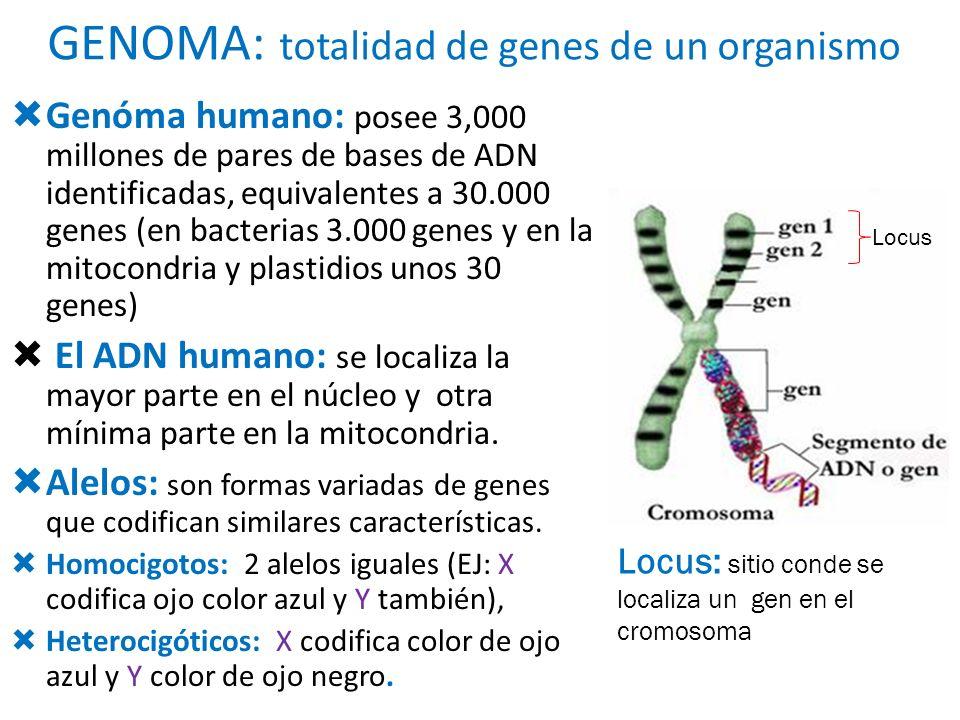 GENOMA: totalidad de genes de un organismo