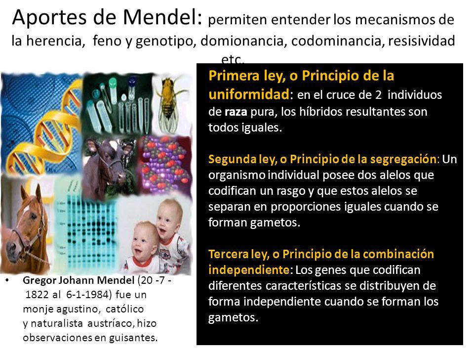 Aportes de Mendel: permiten entender los mecanismos de la herencia, feno y genotipo, domionancia, codominancia, resisividad etc.