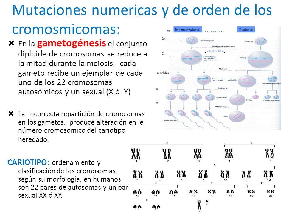 Mutaciones numericas y de orden de los cromosmicomas: