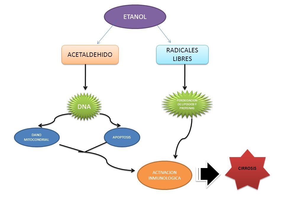ETANOL RADICALES LIBRES ACETALDEHIDO DNA CIRROSIS