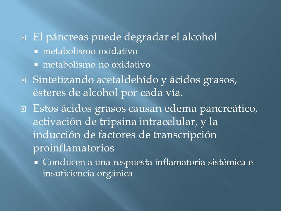 El páncreas puede degradar el alcohol