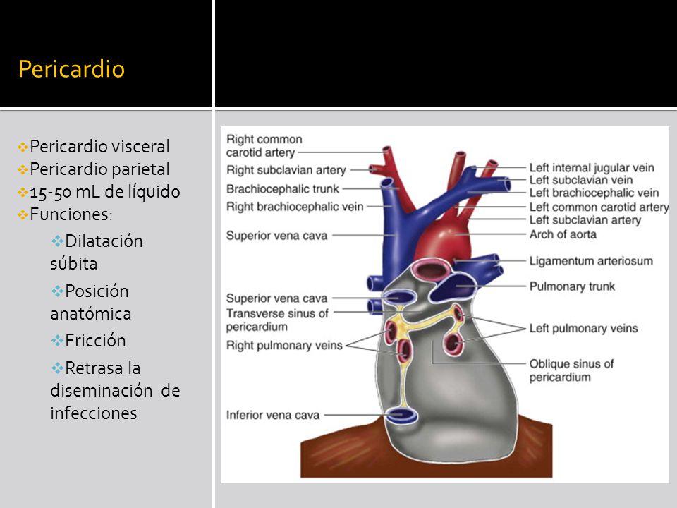 Pericardio Pericardio visceral Pericardio parietal 15-50 mL de líquido