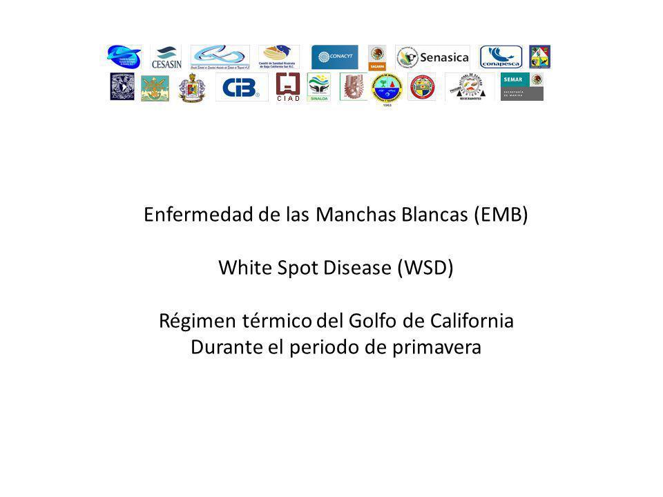 Enfermedad de las Manchas Blancas (EMB) White Spot Disease (WSD)