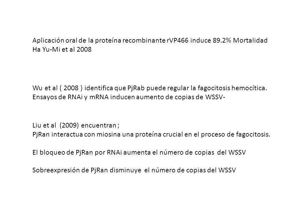 Aplicación oral de la proteína recombinante rVP466 induce 89