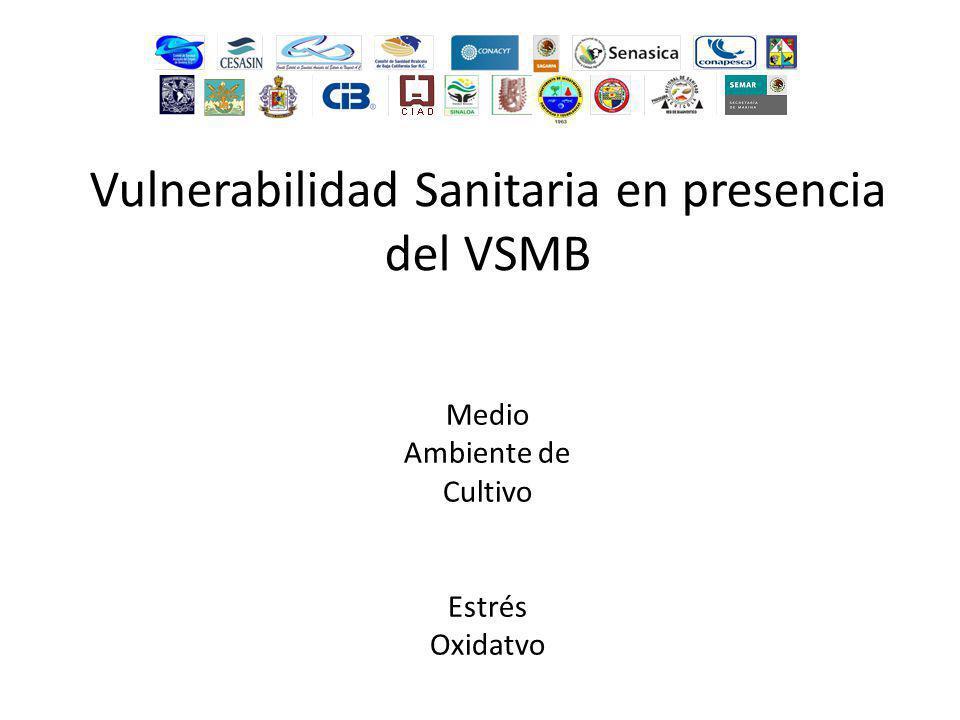 Vulnerabilidad Sanitaria en presencia del VSMB