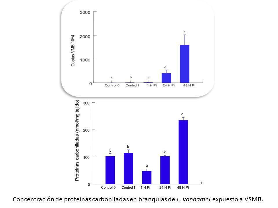 Concentración de proteínas carboniladas en branquias de L