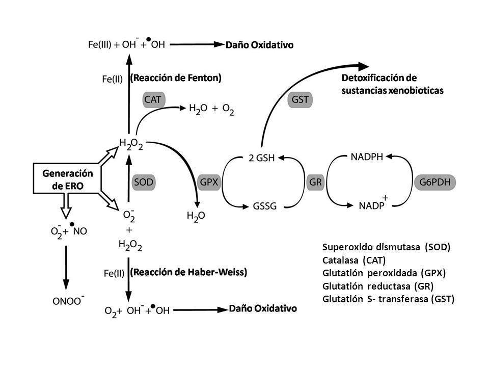 Superoxido dismutasa (SOD)