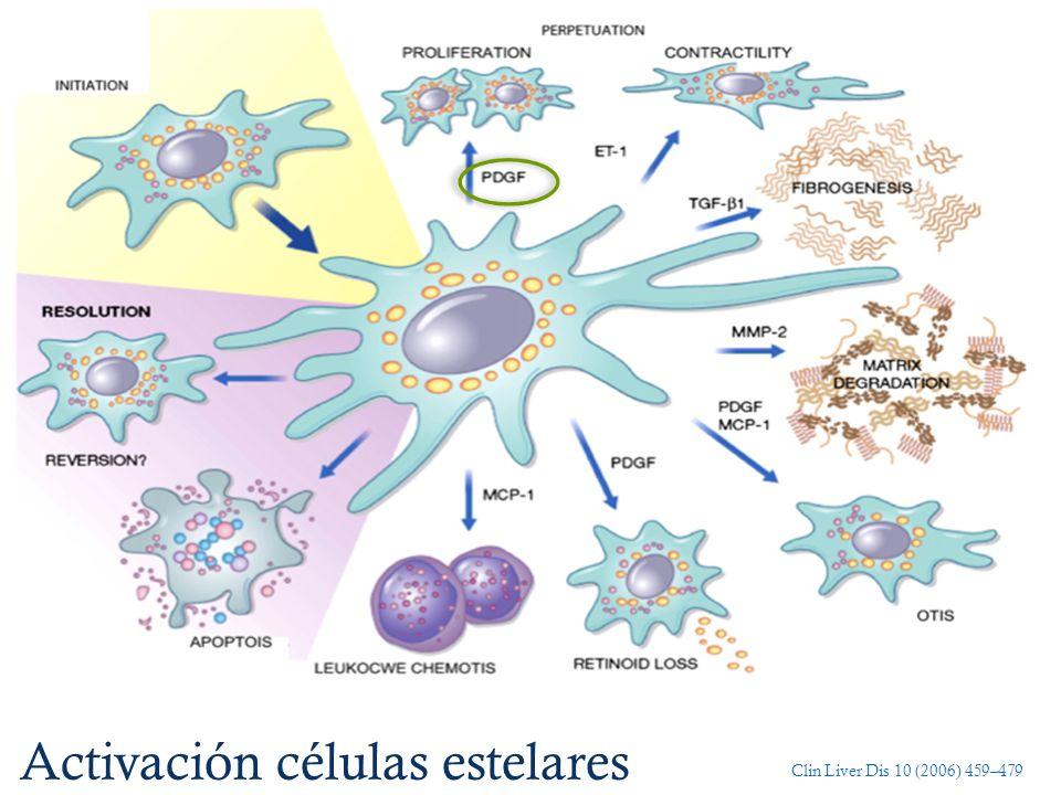 Activación células estelares