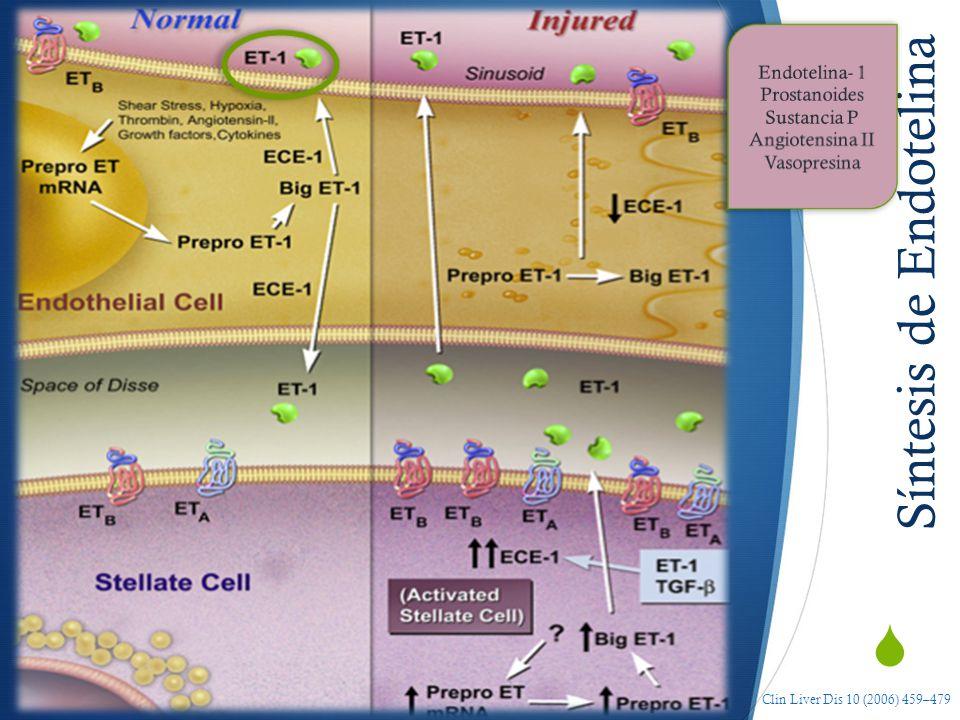 Síntesis de Endotelina