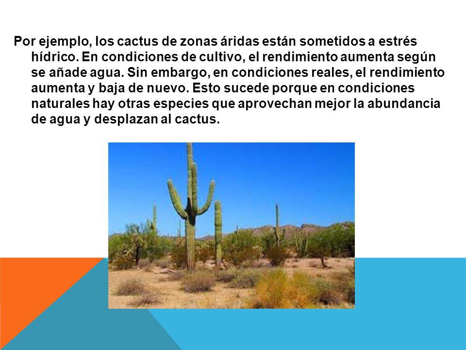 Por ejemplo, los cactus de zonas áridas están sometidos a estrés hídrico.