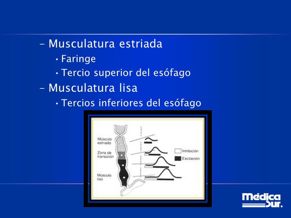 Musculatura estriada Musculatura lisa Faringe