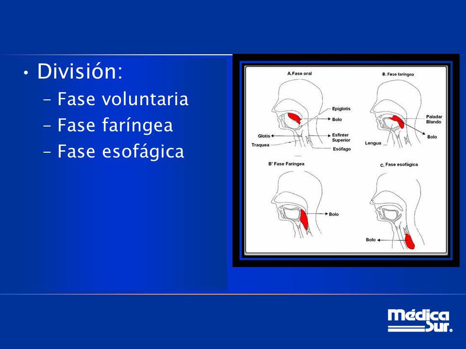División: Fase voluntaria Fase faríngea Fase esofágica