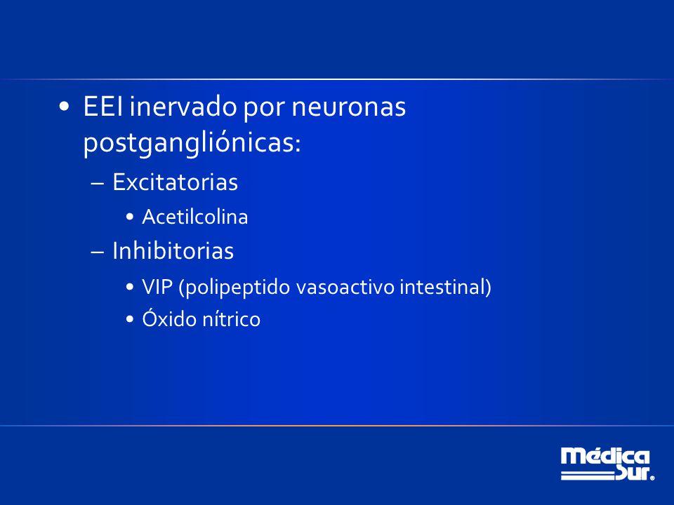 EEI inervado por neuronas postgangliónicas: