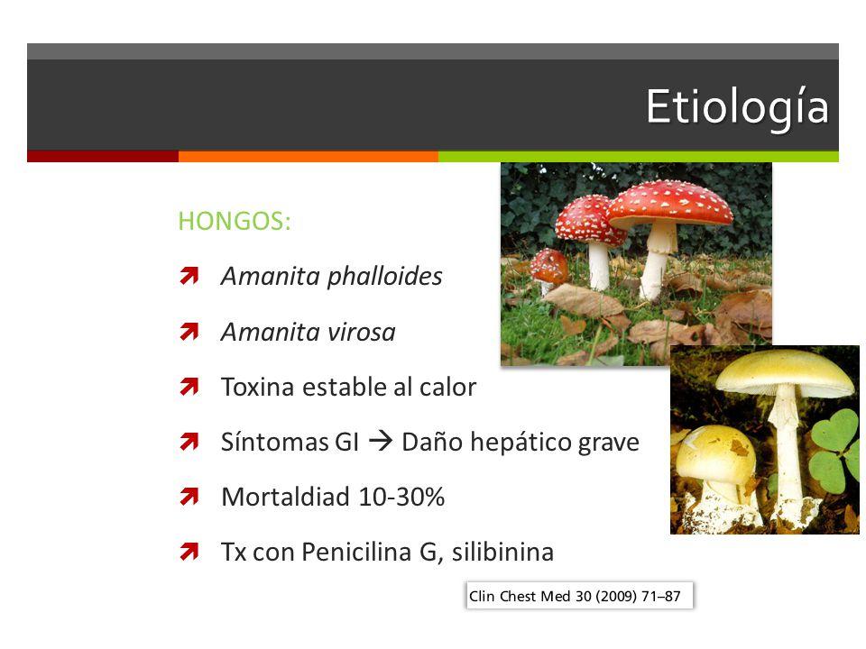 Etiología HONGOS: Amanita phalloides Amanita virosa