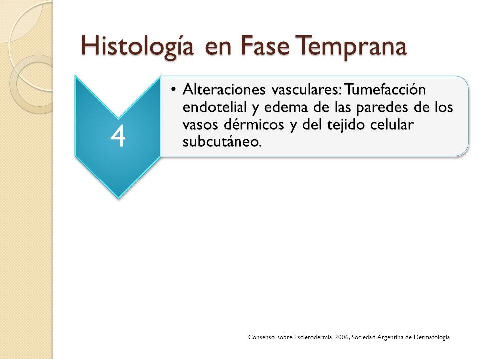Histología en Fase Temprana