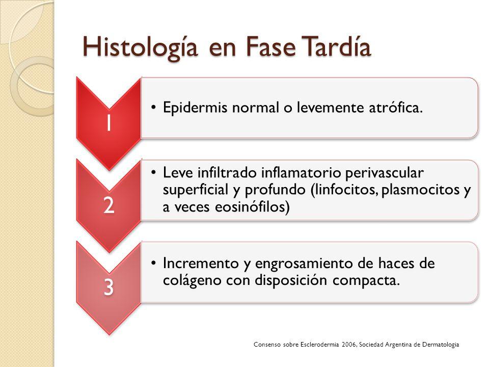 Histología en Fase Tardía