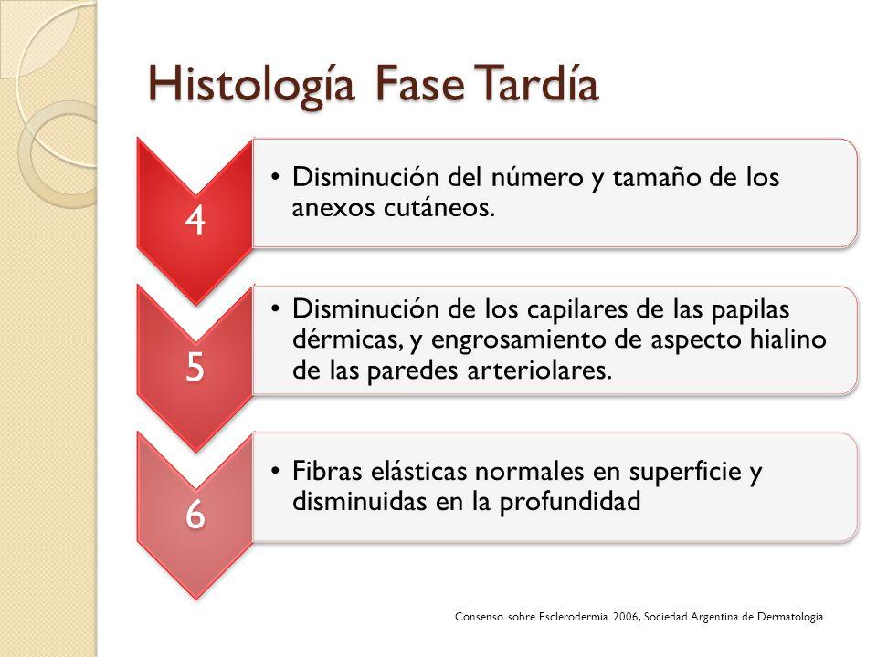 Histología Fase Tardía