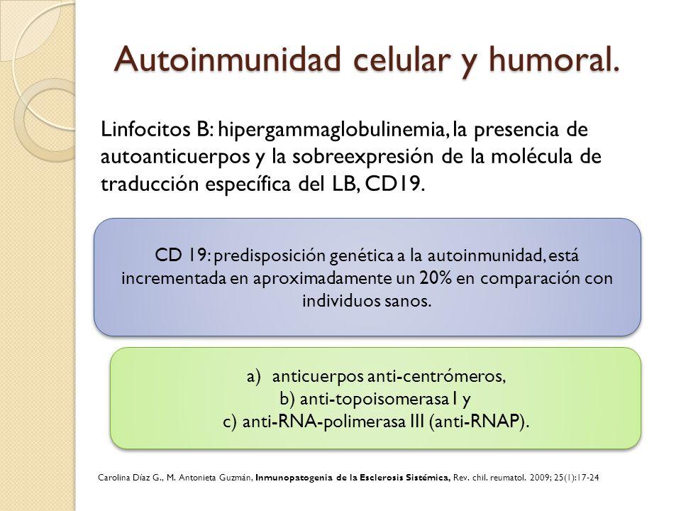 Autoinmunidad celular y humoral.