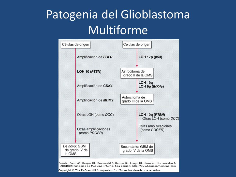 Patogenia del Glioblastoma Multiforme