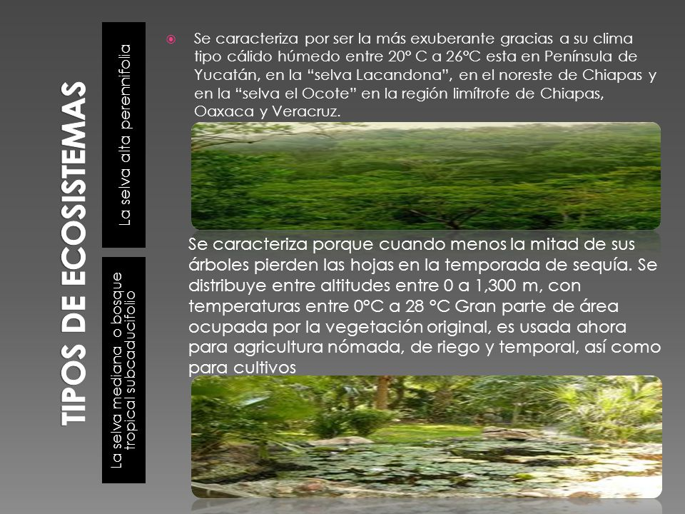 TIPOS DE ECOSISTEMAS La selva alta perennifolia.