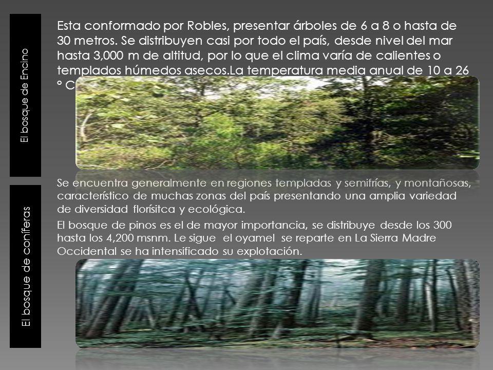 El bosque de Encino