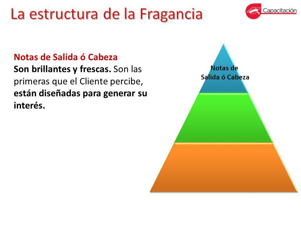 La estructura de la Fragancia