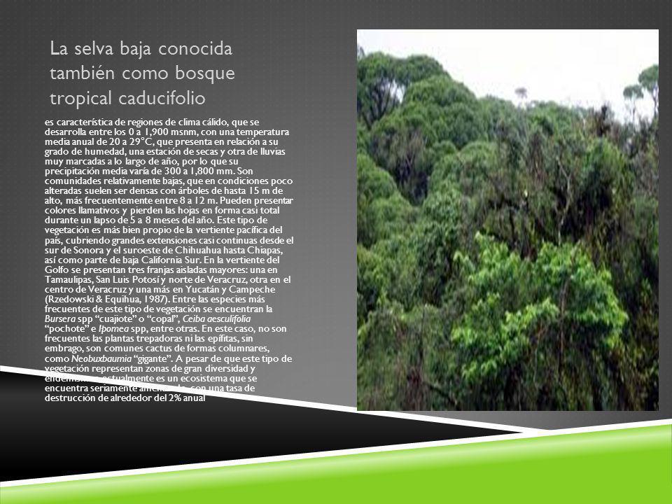 La selva baja conocida también como bosque tropical caducifolio