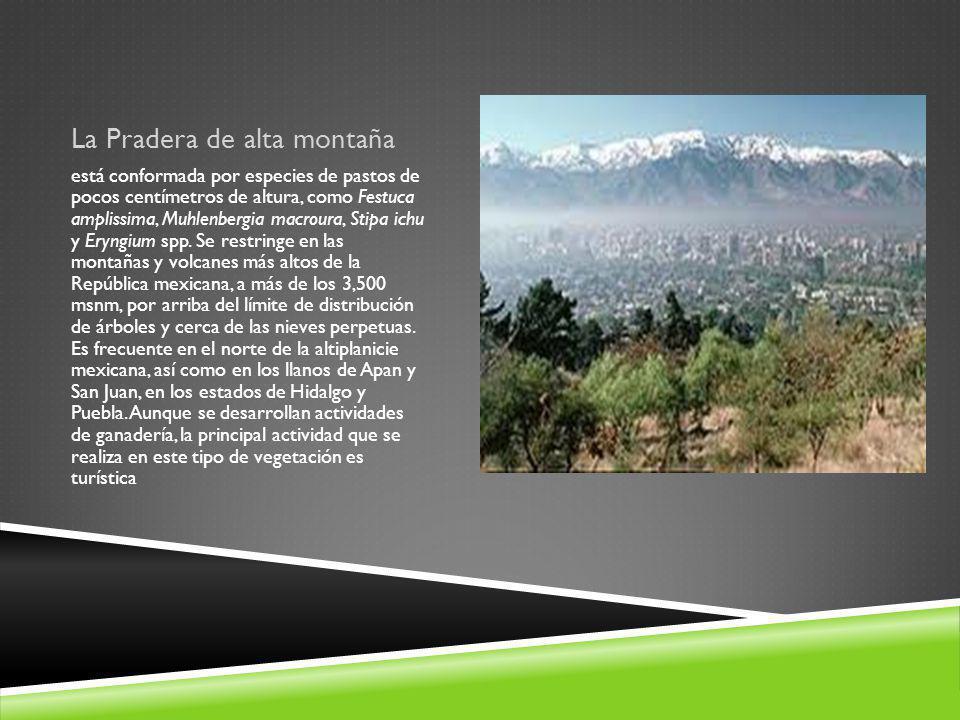 La Pradera de alta montaña
