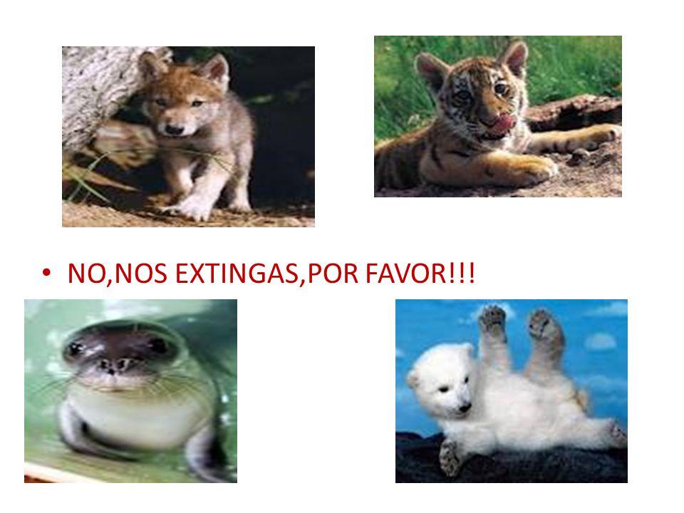 NO,NOS EXTINGAS,POR FAVOR!!!