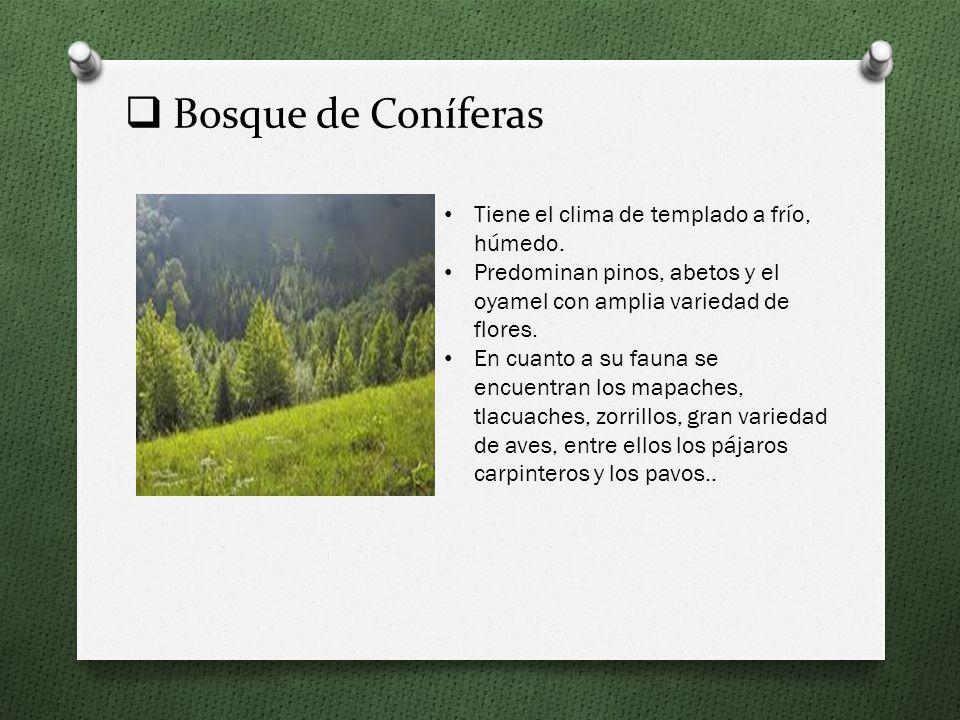 Bosque de Coníferas Tiene el clima de templado a frío, húmedo.